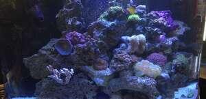 3 Little Fish Scv