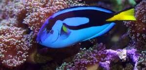 Natural Wonders Fish & Pet Supplies