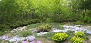 The Viles Arboretum