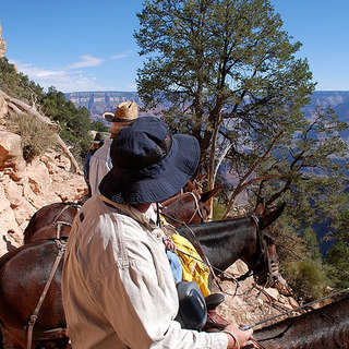 Mule Rides Grand Canyon