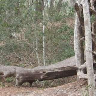 Jacksonville Arboretum