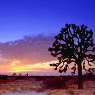 Joshua Tree Retreat Center