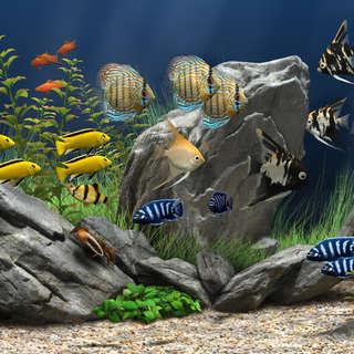 National Park Aquarium