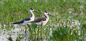 Friends Of The Red River National Wildlife Refuge