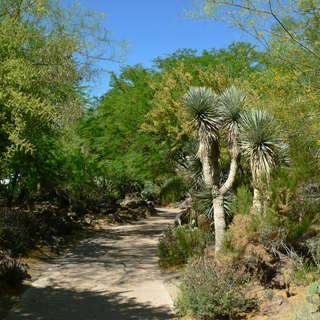 Ethel M Botanical Gardens