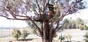 Swallowtail Studios Treehouses