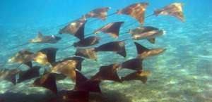 Dolphin And Snorkel Tours