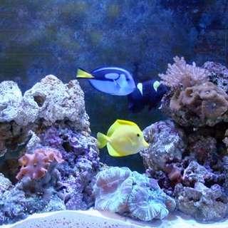 Living Art Aquarium