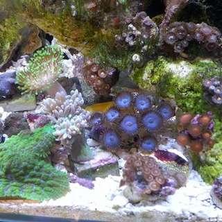 The Ultimate Aquarium