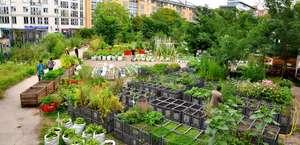 Wangari Gardens