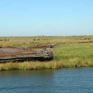 Great Marsh Preserve