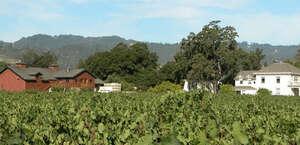 Salvestrin Estate Vineyard And Winery