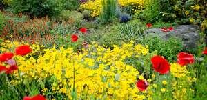 Martha Springer Botanical Garden