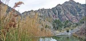 La Madre Springs