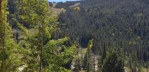 Tenderfoot Lodge