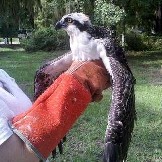 Florida Wildlife Care
