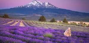 Dreamlodge Retreat At Mt. Shasta