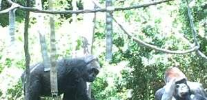 Woodland Park Zoo - West Gate