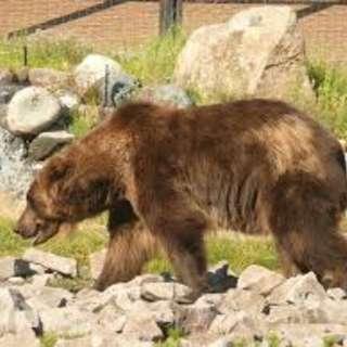 Yellowstone Wildlife Sanctuary