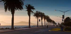 The Palms Of Treasure Island By Liberte