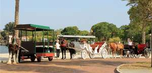 St Petersburg Carriages
