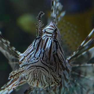 Sea Life Aquarium Charlotte