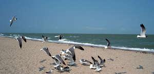 Whataburger Corpus Christi Beach