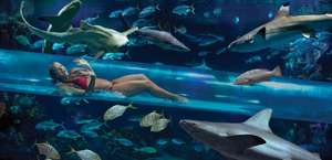 The Tank - Shark tank water slide!