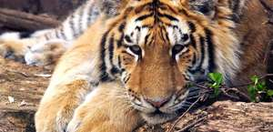 Beardsley Zoological Gardens