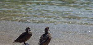 Upper Souris National Wildlife Refuge