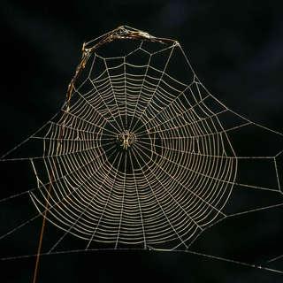 Knights Spider Web Farm