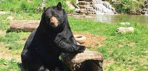 North American Bear Center