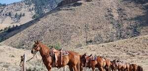 Twin Peaks Ranch Inc