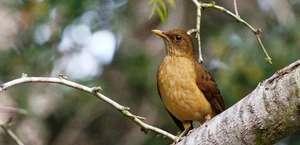 Quinta Mazatlan World Birding Center
