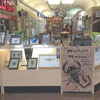Harrell House of Natural Oddities & Bug Museum