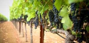 Las Madres Vineyards