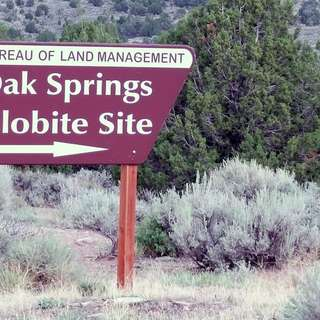 Oak Springs Trilobite Area